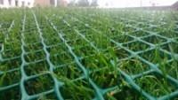 Zatravňovací rohož zelená GrassRoll Standard 2x10m včetně U-Pinů
