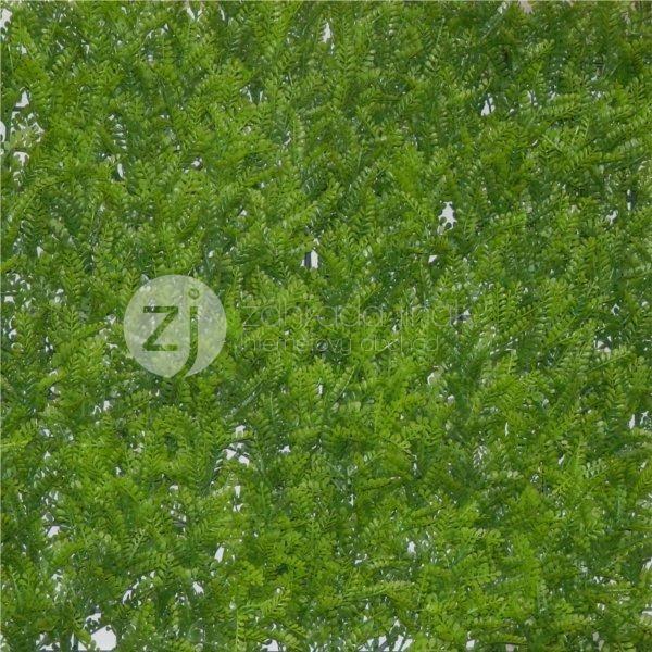 Umělý živý plot FERN, dílec 50 x 50 cm (Vetvičky kapradin)